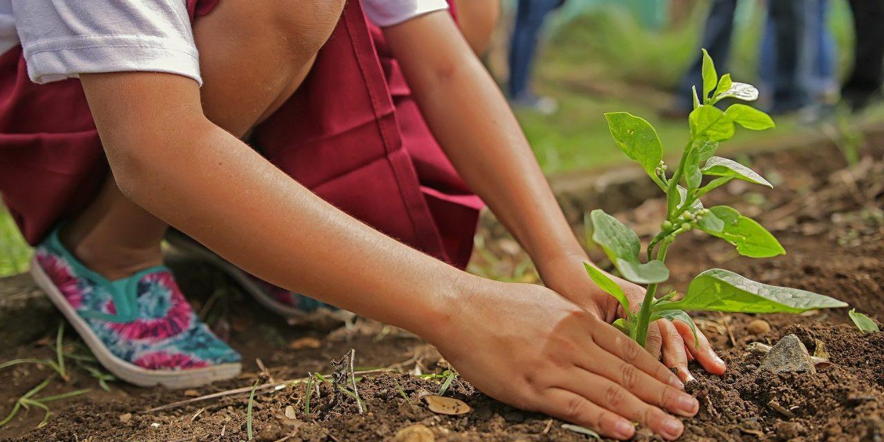 10 règles pour planter des arbres