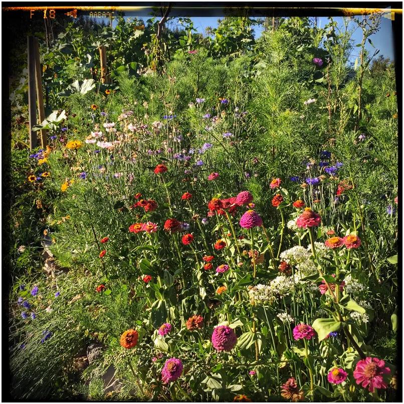 Fleurs-mellifères-4-la-ferme-dautonome-le-blaireau