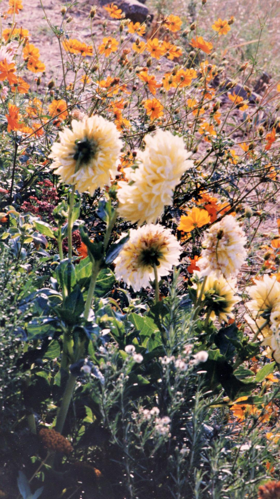 Jardin de la tuilerie en 1998 - Photo par Alfred Cailloux