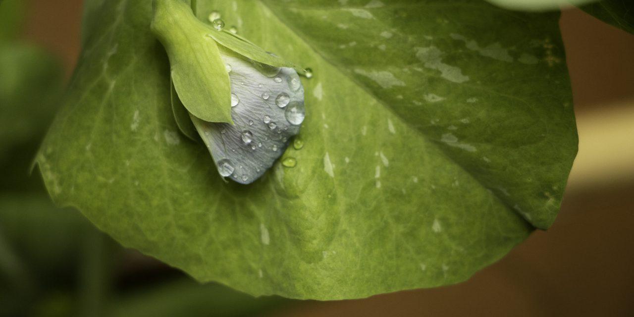 Enfin de la pluie en avril !