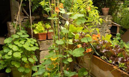 La pluie d'avril fait renaître le jardin de la tuilerie