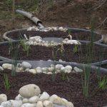 Traitement des eaux usées domestiques par phytoépuration