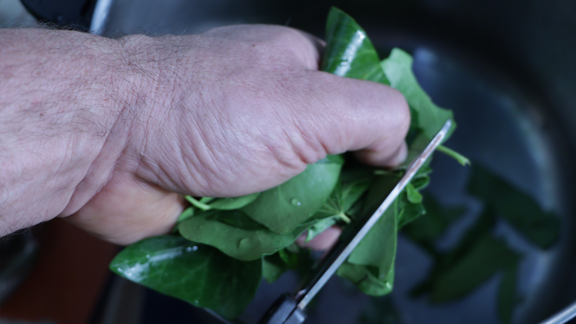 Autonomie Résilience Lessive de lierre Coupe du lierre avec des ciseaux